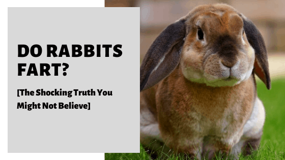 Do Rabbits Fart? [The Shocking Truth You Might Not Believe]
