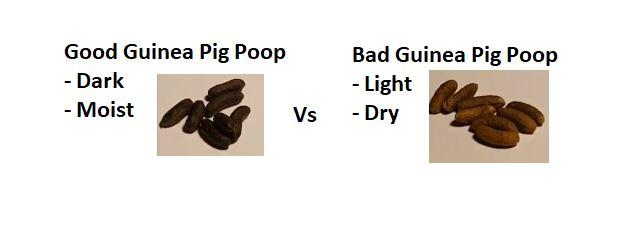 Guinea Pig Poop Examples