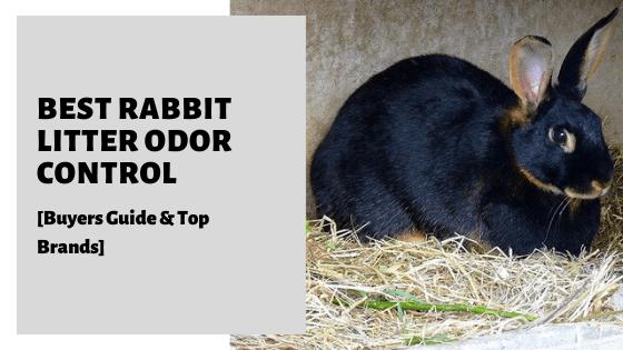Best Rabbit Litter Odor Control [Buyers Guide & Top Brands]
