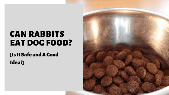 Can Rabbits Eat Dog Food? [Is It Safe and A Good Idea?]