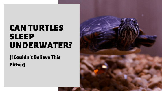 Can Turtles Sleep Underwater? [I Couldn't Believe This Either]