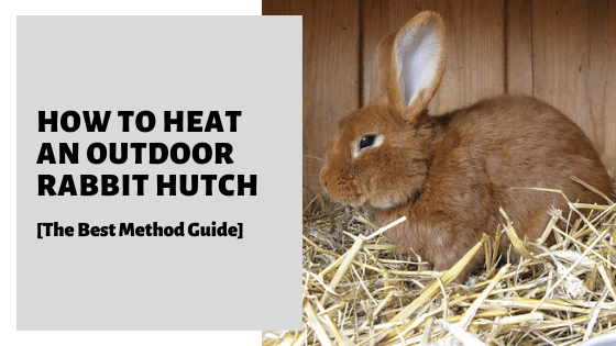 How To Heat An Outdoor Rabbit Hutch [The Best Method Guide]