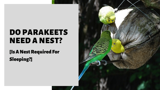 Do Parakeets Need A Nest? [Is A Nest Required For Sleeping?]