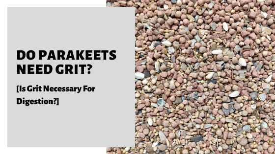 Do Parakeets Need Grit? [Is Grit Necessary For Digestion?]