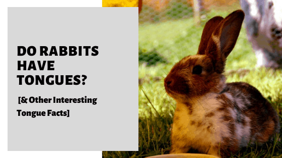 Do Rabbits Have Tongues_ [& Other Interesting Tongue Facts]