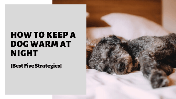 How To Keep A Dog Warm At Night [Best Five Strategies]