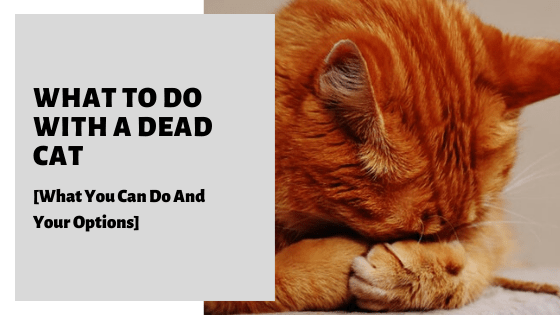 What To Do With A Dead Cat [What You Can Do And Your Options]