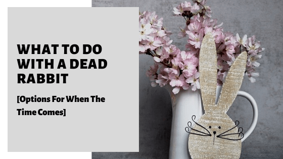 What To Do With A Dead Rabbit [Options For When The Time Comes]