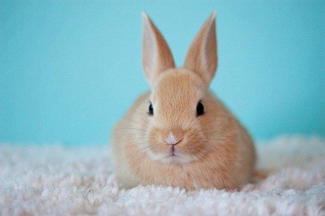 Rabbit Sleep