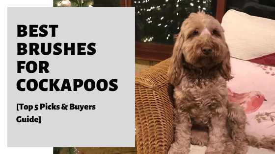 Best Brushes For Cockapoos [Top 5 Picks & Buyers Guide]