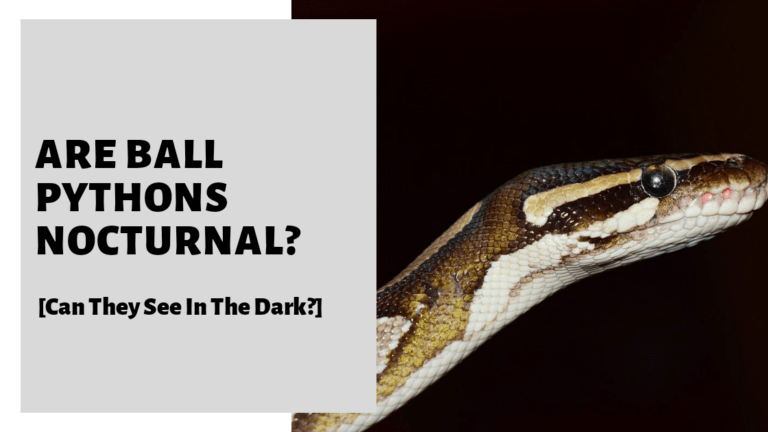 Are Ball Pythons Nocturnal? [Can They See In The Dark?]