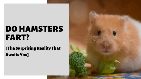 Do Hamsters Fart_ [The Surprising Reality That Awaits You]