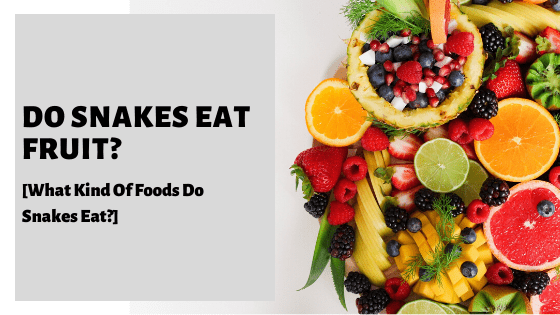 Do Snakes Eat Fruit? [What Kind Of Foods Do Snakes Eat?]