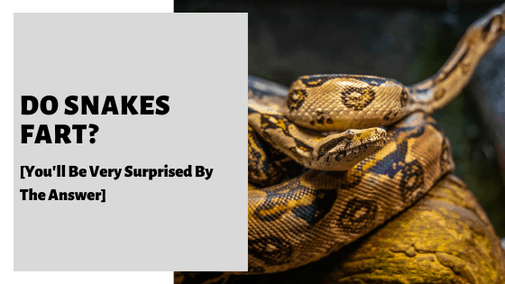 Do Snakes Fart_ [You'll Be Very Surprised By The Answer]