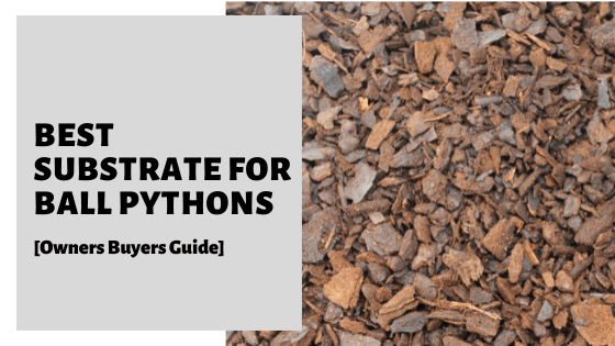 Best Substrate For Ball Pythons [Owners Buyers Guide]