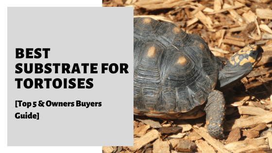Best Substrate For Tortoises [Top 5 & Owners Buyers Guide]
