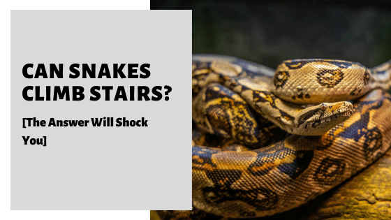 Can Snakes Climb Stairs_ [The Answer Will Shock You]
