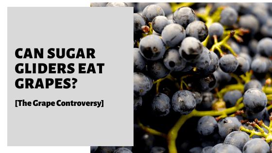 Can Sugar Gliders Eat Grapes? [The Grape Controversy]