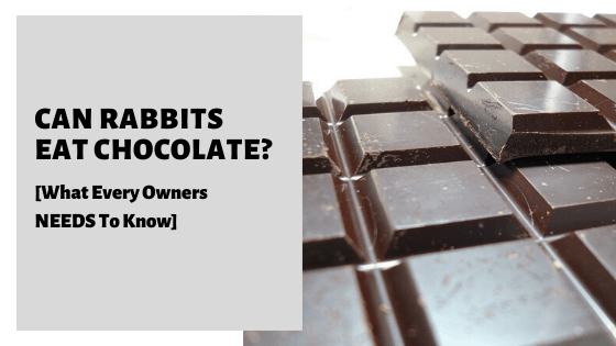 Can Rabbits Eat Chocolate_ [What Every Owners NEEDS To Know]