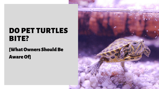 Do Pet Turtles Bite? [What Owners Should Be Aware Of]