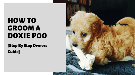 How To Groom A Doxiepoo [Step By Step Owners Guide]