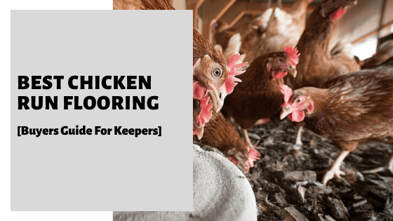 Best Chicken Run Flooring [Buyers Guide For Keepers]