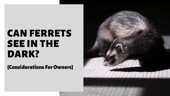 Can Ferrets See In The Dark? [Considerations For Owners]