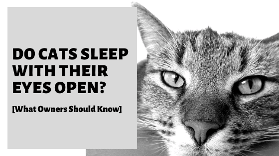 Do Cats Sleep With Their Eyes Open? [What Owners Should Know]