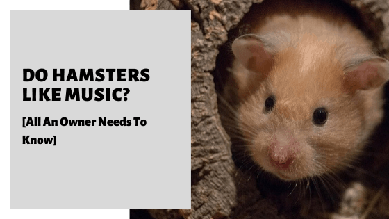 Do Hamsters Like Music? [All An Owner Needs To Know]