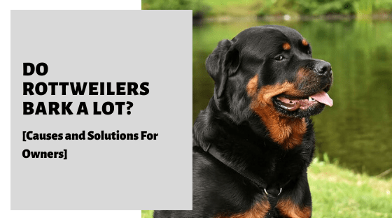 Do Rottweilers Bark A Lot? (Causes and Solutions For Owners]
