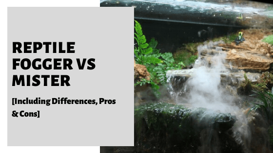 Reptile Fogger Vs Mister [Including Differences, Pros & Cons]
