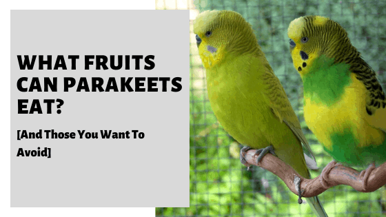 What Fruits Can Parakeets Eat? [And Those You Want To Avoid]