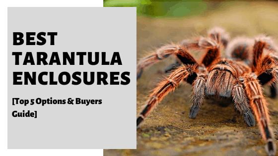 Best Tarantula Enclosures [Top 5 Options & Buyers Guide]