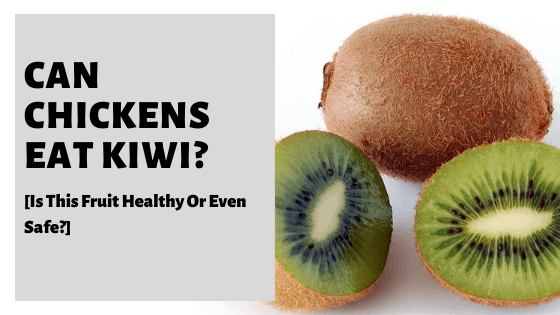 Can Chickens Eat Kiwi? [Is This Fruit Healthy Or Even Safe?]