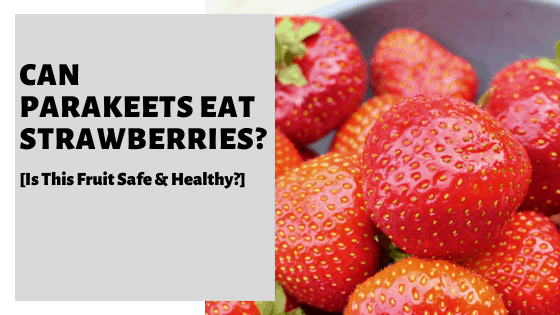 Can Parakeets Eat Strawberries? [Is This Fruit Safe & Healthy?]