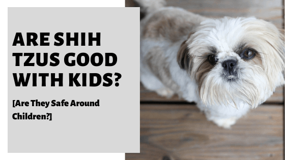 Are Shih Tzus Good With Kids? [Are They Safe Around Children?]