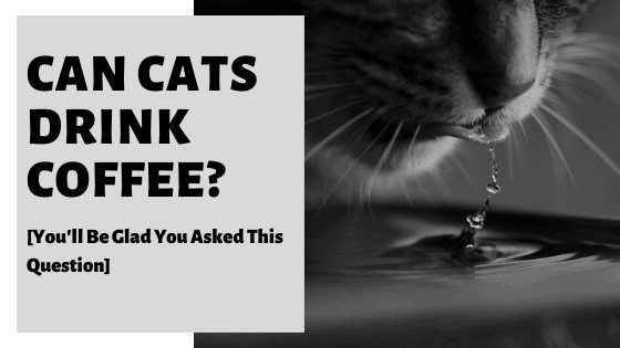 Can Cats Drink Coffee? [You'll Be Glad You Asked This Question]