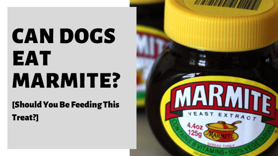 Can Dogs Eat Marmite? [Should You Be Feeding This Treat?]