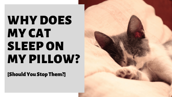Why Does My Cat Sleep On My Pillow? [Should You Stop Them?]