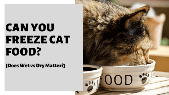 Can You Freeze Cat Food? [Does Wet vs Dry Matter?]