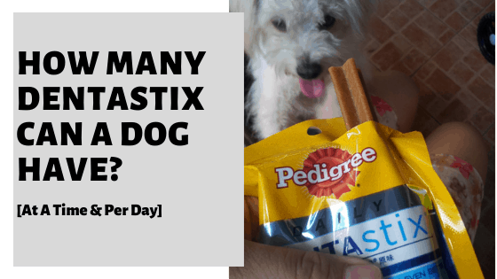 How Many Dentastix Can A Dog Have? [At A Time & Per Day]
