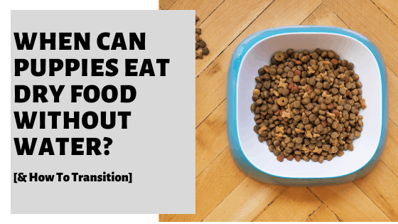 When Can Puppies Eat Dry Food Without Water? [& How To Transition]