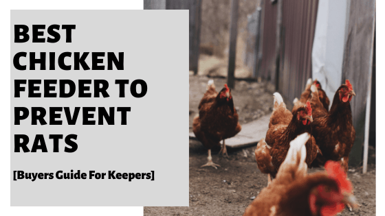 Best Chicken Feeder To Prevent Rats [Buyers Guide For Keepers]