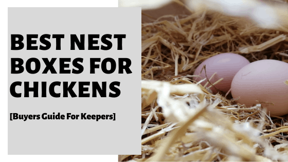 Best Nest Boxes For Chickens [Buyers Guide For Keepers]