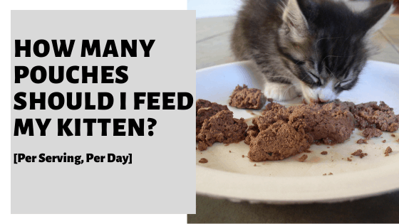 How Many Pouches Should I Feed My Kitten? [Per Serving, Per Day]