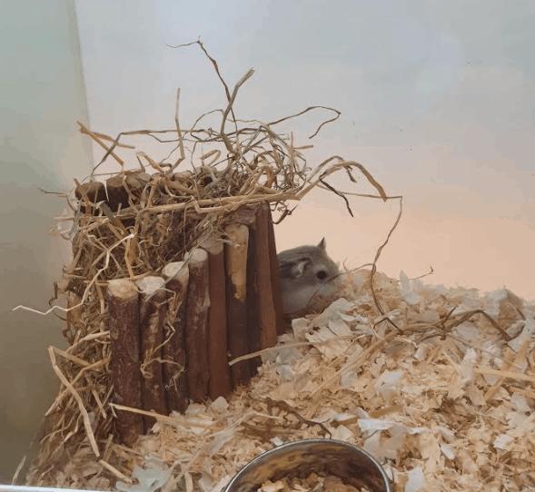 Jeremy's Family Hamster