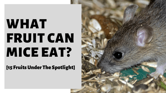 What Fruit Can Mice Eat? [15 Fruits Under The Spotlight]