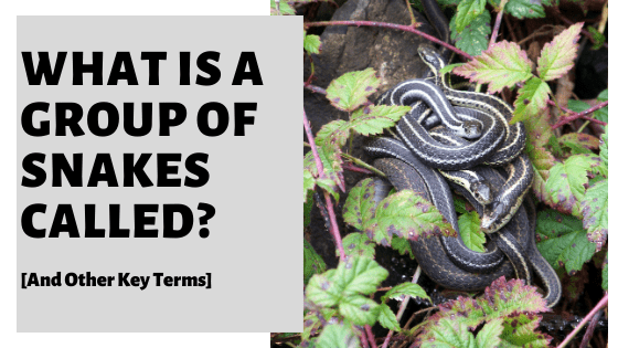 What Is A Group Of Snakes Called? [And Other Key Terms]