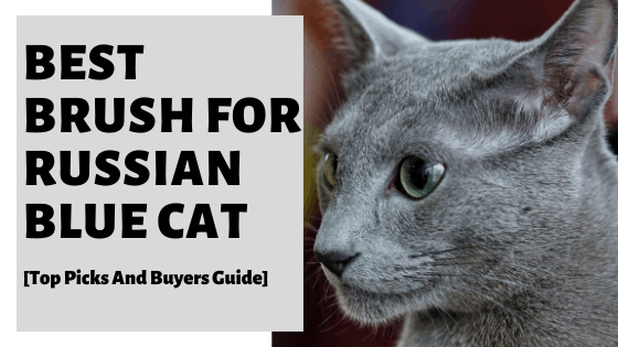 Best Brush For Russian Blue Cat [Top Picks And Buyers Guide]
