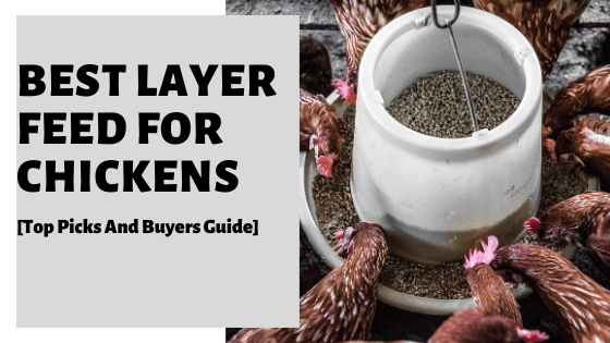 Best Layer Feed For Chickens [Top Brands & Buyers Guide]